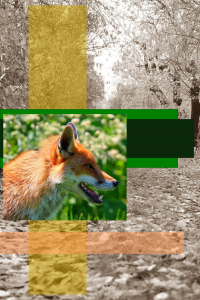 Fox in the Hen House